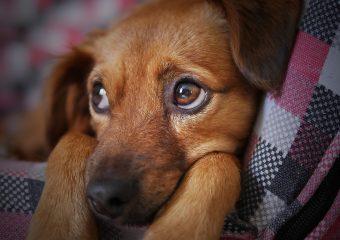 Dog Needs a Home